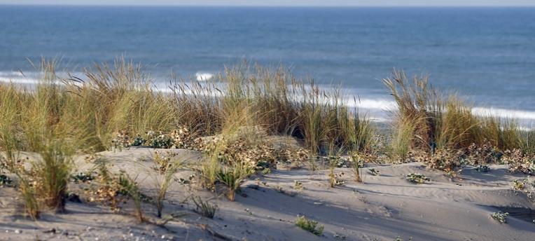nature at naturist beach